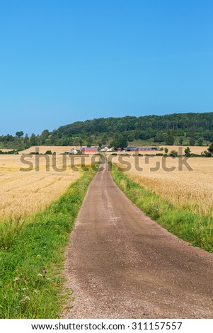 Dirt road through the cornfields to the farm - stock photo