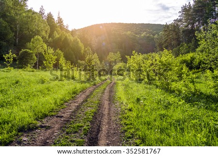 Dirt road through the forest - stock photo