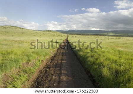 Dirt road to infinity through green grasslands of Lewa Wildlife Conservancy in North Kenya, Africa - stock photo