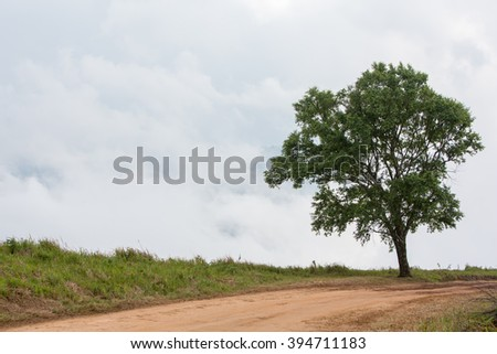Dirt road track on remote mountain with fog and meadow in the background at Phu Lom Lo , Loei, Thailand. - stock photo