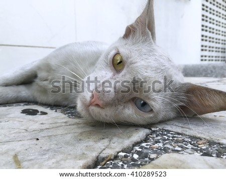 Dirty cat eye colors lying on a marble table - stock photo