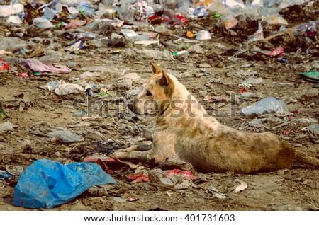 Dirty Dog in Municipal waste disposal open dump process.  Dump site at Ratchaburi Province - stock photo