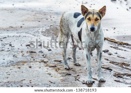 Dirty female dog on wet concrete floor - stock photo