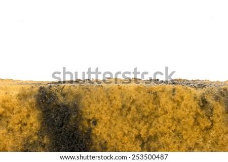 Dirty sponge after washing car isolated on white background and space for text - stock photo