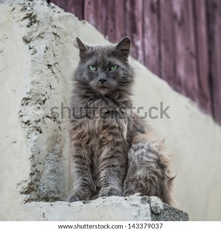 Dirty street cat sitting outdoors - stock photo