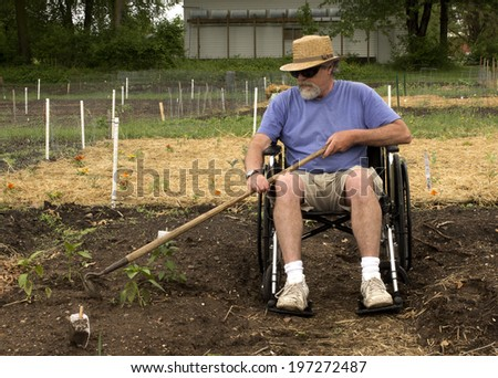 disabled man in a wheelchair weeding his garden with a hoe - stock photo