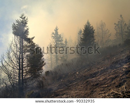 disastrous consequences of forest fires - stock photo