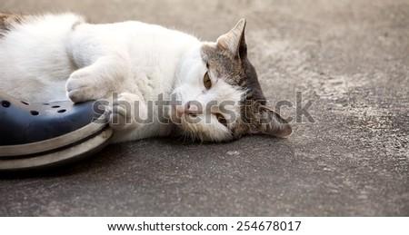 disconsolate cat - stock photo