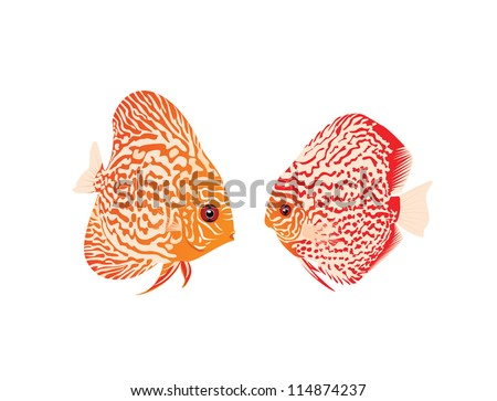 Discus in discussion - stock photo