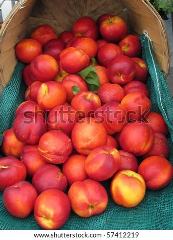 display of fresh nectarines - stock photo