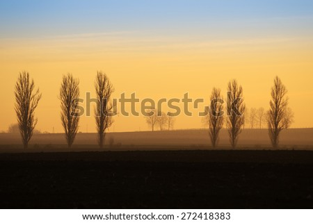Distant trees silhouettes on the horizon in the early morning sunrise - stock photo