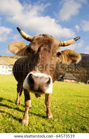 distorted brown cow on green grass and blue sky background - stock photo