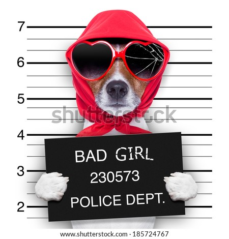 diva lady dog posing for a lovely mugshot - stock photo