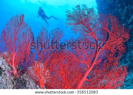 diver and coral - stock photo