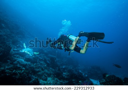 Diver and green sea turtle swimming in Derawan, Kalimantan, Indonesia underwater photo. DIver chasing the turtle to take picture of it. - stock photo