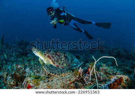 Diver and green Turtle in Gili, Lombok, Nusa Tenggara Barat, Indonesia underwater photo. Green turtle Chelonia mydas resting on the reefs - stock photo