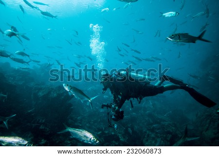 Diver and group of fishes in Derawan, Kalimantan, Indonesia underwater photo. There are a lot of silvery fishes. - stock photo