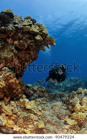 Diver checking out a Kona Reef in Hawaii - stock photo
