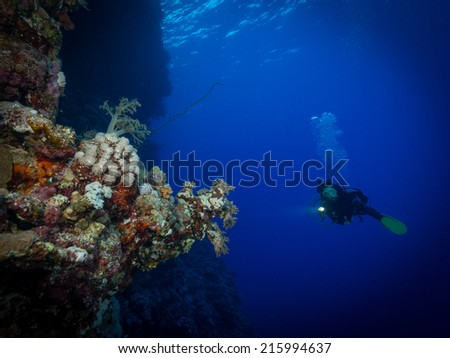 Diver explores the soft corals on Soraya Reef, Red Sea, Egypt - stock photo