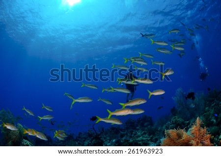 Diver immersed in fish, Grand Cayman - stock photo