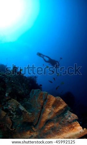 diver's silhouette with hard corals view at Menjangan Island, Bali, Indonesia. - stock photo