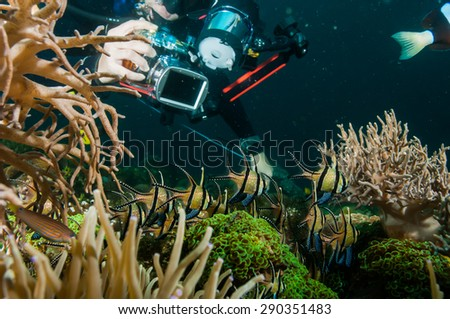 diver take a photo video lembeh indonesia scuba diving - stock photo