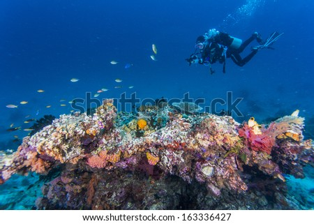 diver take photo floating under water - stock photo