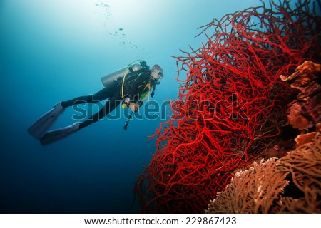 Diver Underwater swimming around giant red coral - stock photo