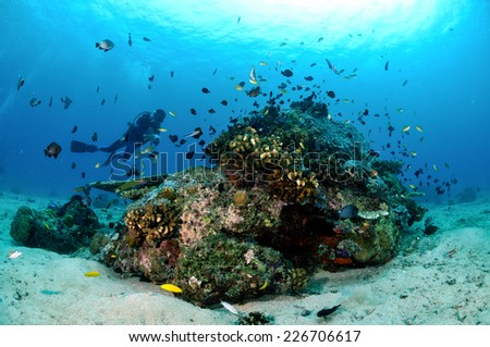 Diver, various coral fishes and coral reefs in Gili, Lombok, Nusa Tenggara Barat, Indonesia underwater photo. there are acropora, angelfish, butterflyfish - stock photo