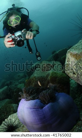 diver with camera on reef - stock photo