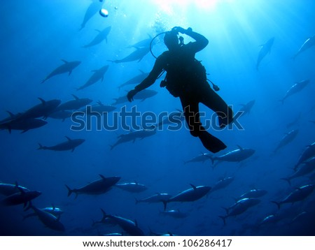Diver with Tuna in the background - stock photo