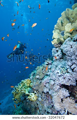 Divers enjoying a tropical reef - stock photo