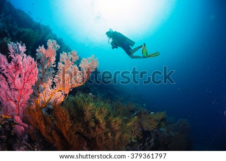 Divers exploring the bright coral reef in a tropical sea - stock photo