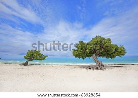 Divi divi tree on Eagle beach, Aruba - stock photo