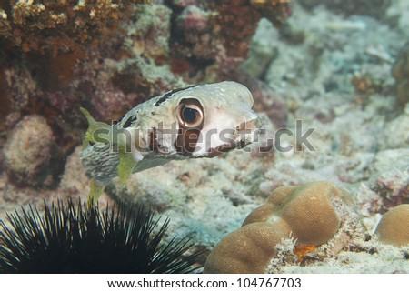 Diving in Seychelles, Anse Volbert, Praslin, Africa - stock photo