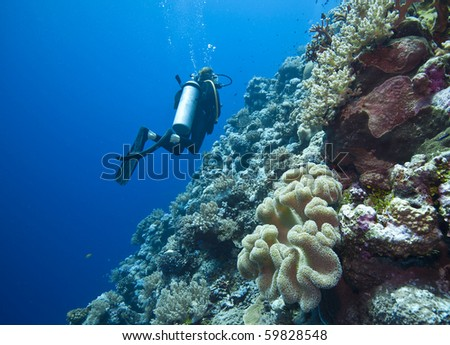 diving on the great barrier reef in Queensland Australia - stock photo