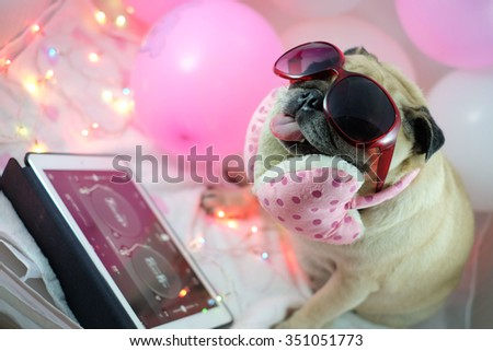 DJ Pugs Mixed with turntable programming.(Pug dog wearing DJ costume.) - stock photo