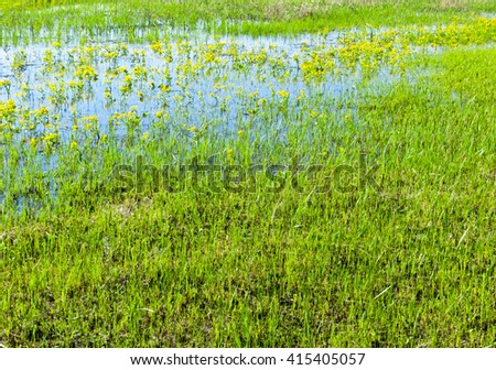 Dnieper marshes - stock photo