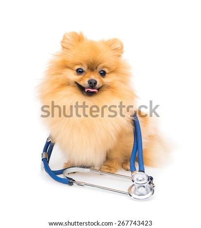 Doctor dog - stock photo