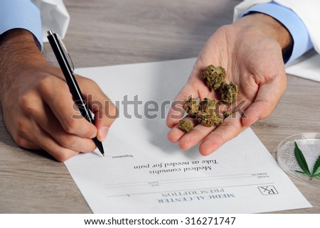 Doctor hand holding dry medical cannabis on table close up - stock photo