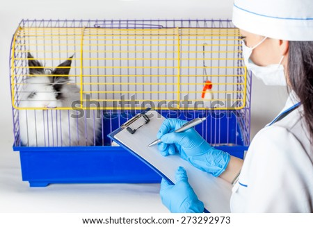 doctor makes an entry near the cells with a decorative rabbit - stock photo
