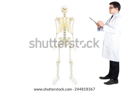 doctor writing clipboard for diagnosis full body of human skeletons anatomy isolated on white background with clipping path - stock photo