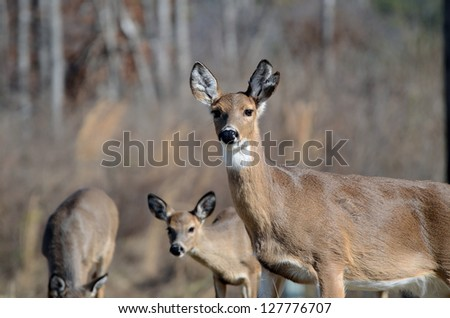 Doe and Fawn - stock photo