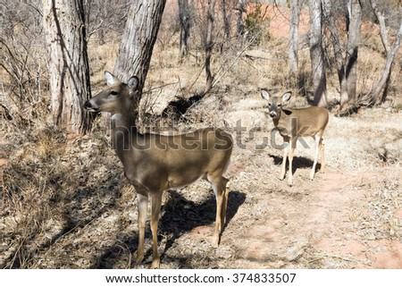 Doe and fawn in the  Palo Duro Canyon State Park visitors,  Texas, USA - stock photo
