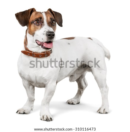 Dog. - stock photo