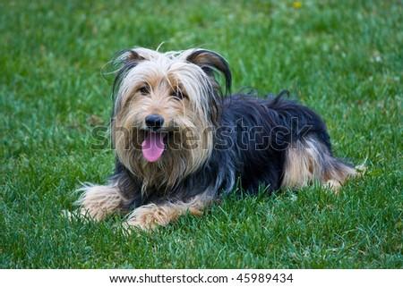 dog 3 - stock photo