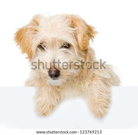 Dog above white banner. isolated on white background - stock photo