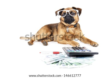 dog accountant - stock photo
