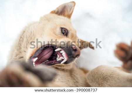 Dog active playing - stock photo
