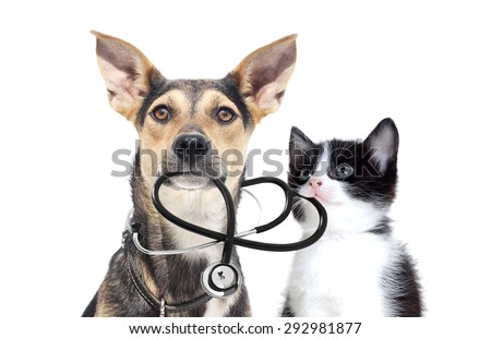 dog and a cat and a stethoscope - stock photo